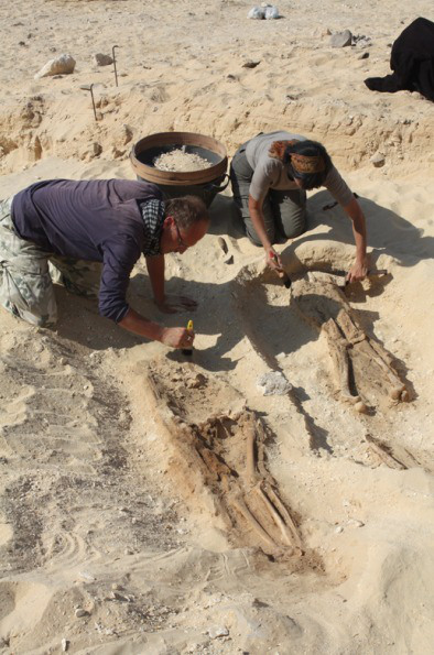 the-amarna-project2