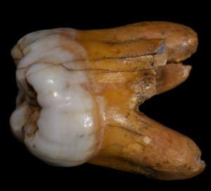 molare