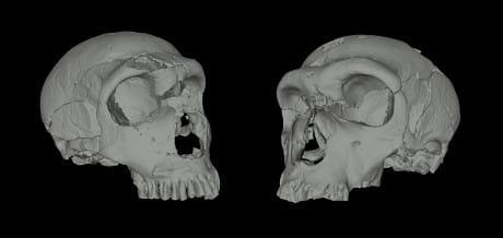 neandertal 1