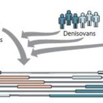 denisova 2