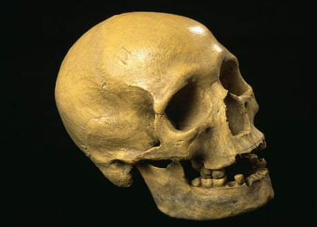 ´Cro-Magnon skull.    The  Cro-Magnons  were  early humans (Homo sapiens sapiens) that inhabited parts of Europe from about 50,000 years ago.  They  a...
